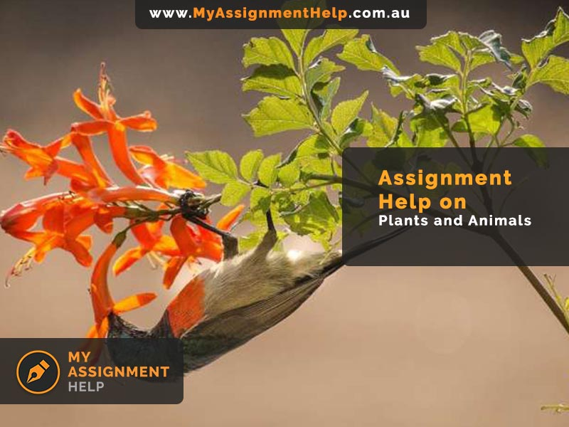 Assignment Help on Plants and Animals